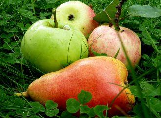 Vergessene Früchte