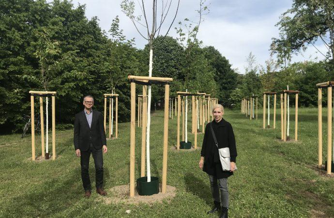 """Bäume vom """"Grünen-Ring-Tag"""" finden ihr Zuhause"""